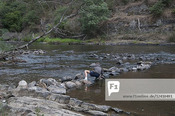 A boy arranges stones in the shallows of the Yarra River at Warrandyte  Melbourne  Australia