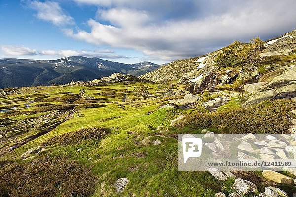 Spring at National Park of Penialara Lagoons. Sierra de Guadarrama. Madrid. Spain.