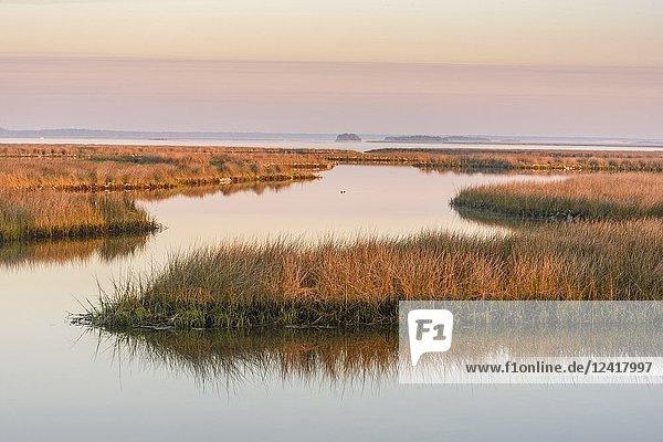 Salt water marshes at dawn  St. Marks NWR  Florida  USA.