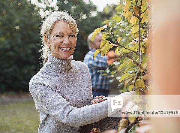 Portrait smiling  confident mature woman harvesting apples in garden