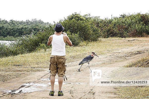 Uganda  Queen Elisabeth National Park  Touist taking pictures of a marabu