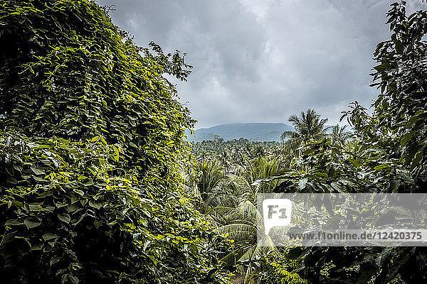 Thailand  Koh Phangan  landscape at stormy atmosphere