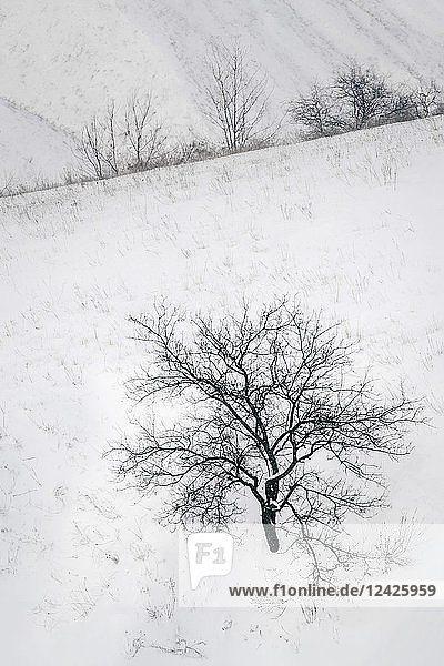 Bare trees in snow