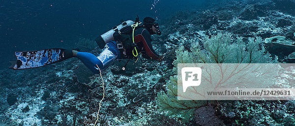 Side view of scuba diver swimming in Tubbataha Reef  Cagayancillo  Philippines