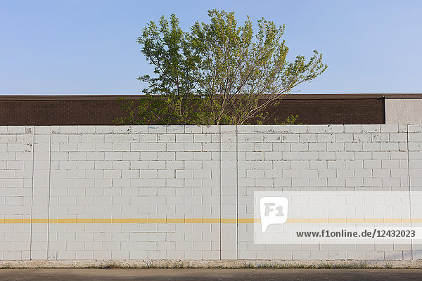 Tree behind playground wall and building  Swift Current  Saskatchewan  Canada.