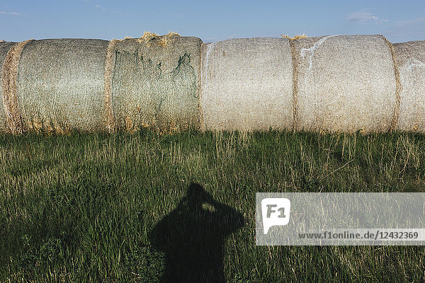 Row of hay bales  photographer's shadow in foreground  near Climax  Saskatchewan  Canada.