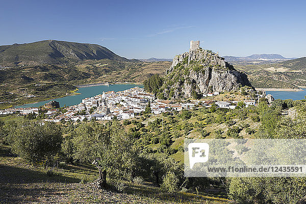 Moorish castle above white village with olive groves  Zahara de la Sierra  Sierra de Grazalema Natural Park  Andalucia  Spain  Europe
