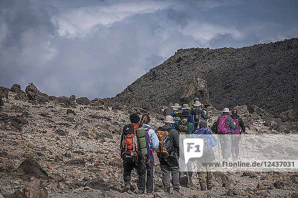 A group of trekkers with their local guide descending in Barranco Camp on the Machame Route on Mount Kilimanjaro  Tanzania  East Africa  Africa