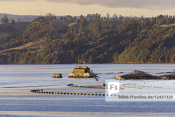 Floating house  salmon and mussel aquaculture  rural scene  late evening sun  Castro inlet  Isla Grande de Chiloe  Chile  South America