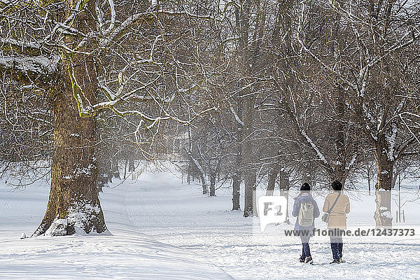 Green Park in the snow  London  England  United Kingdom  Europe