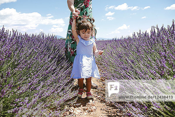 France  Provence  Valensole plateau  Mother and daughter walking among lavender fields in the summer