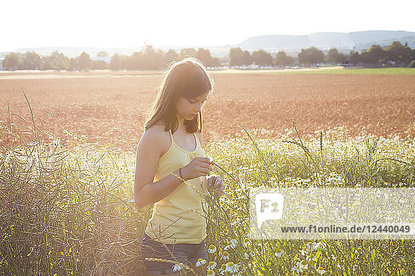 Young girl standing on meadow at summer evening Young girl standing on meadow at summer evening