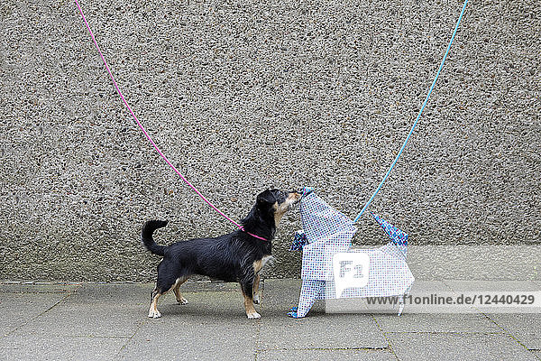 Blue origami dog and dog sniffing