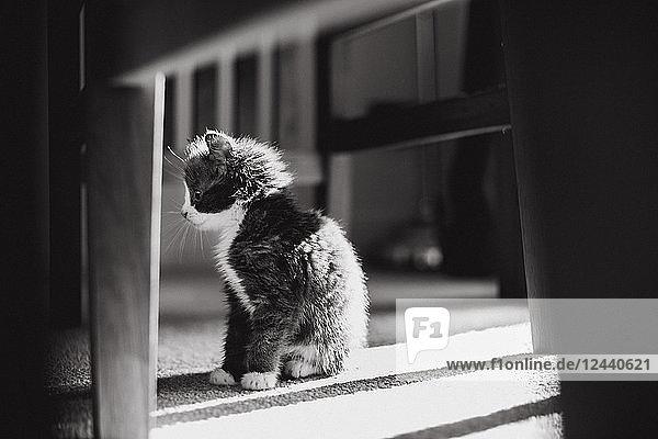 Kitten sitting on the floor watching something