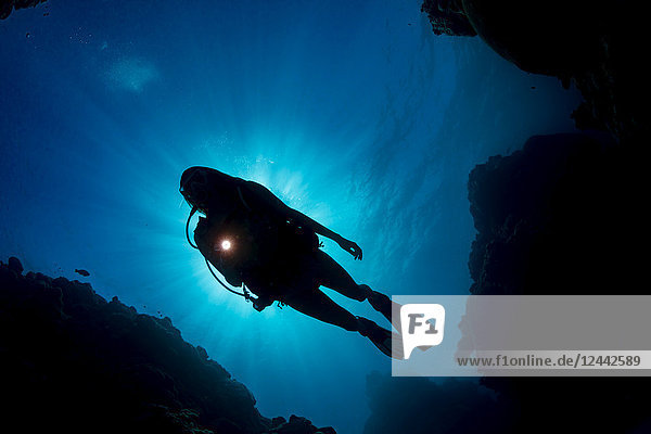 The silhouette of a diver in front of the sun  from below looking up at the surface; Yap  Micronesia