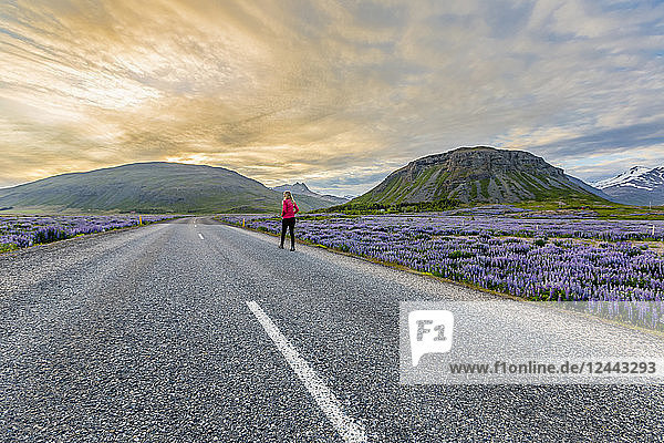 A female traveller walks alone on the empty road in Iceland  walking towards the sunset along the roadside filled with wildflowers  Iceland