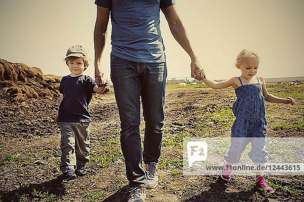 A father walks and holds hands with his young son and daughter on a farm  Edmonton  Alberta  Canada