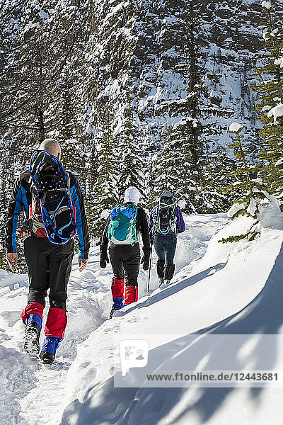 Male and two female snowshoers along a snow-covered trail with snow-covered mountain cliff in the background  Banff National Park; Lake Louise  Alberta  Canada