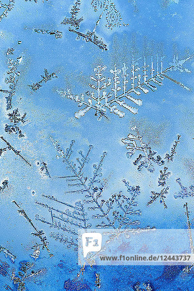Extreme close-up of frost crystals patterns on glass; Calgary  Alberta  Canada