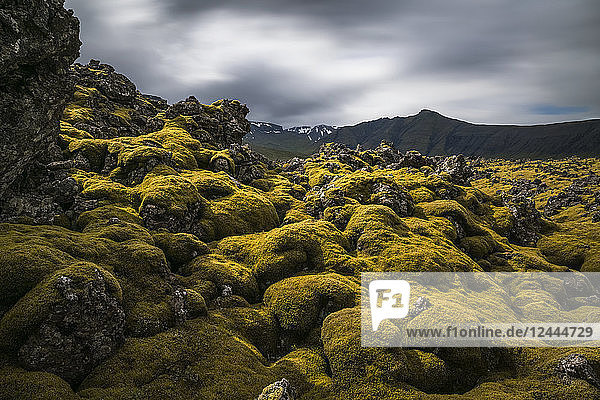 Moss covered lava field on the Snaefellsness Peninsula  Iceland
