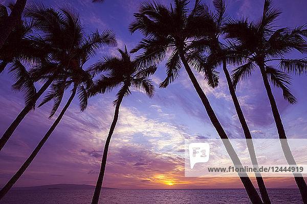 Palmen bei Sonnenuntergang  Wailea  Maui  Hawaii  Vereinigte Staaten von Amerika