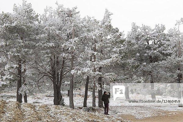 Snow landscape in winter Gudar mountains Teruel Aragon Spain
