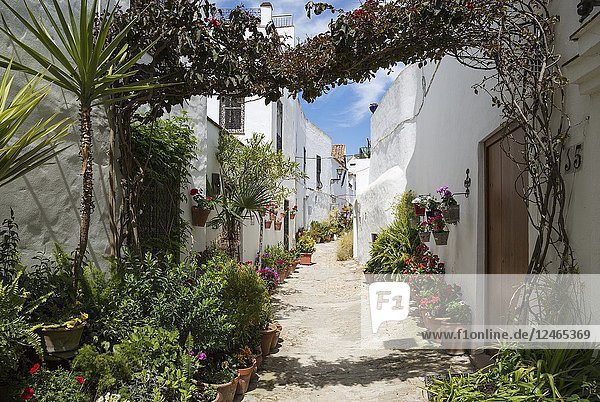 Beautiful alleyway with flowerpots and brillianty whitewashed houses in the hilltop town of Vejer de la Frontera. Cadiz province  Andalusia  Spain.