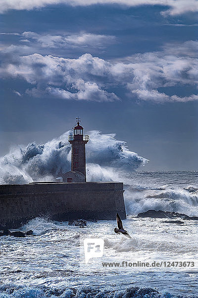 Waves on a lighthouse and a seagull