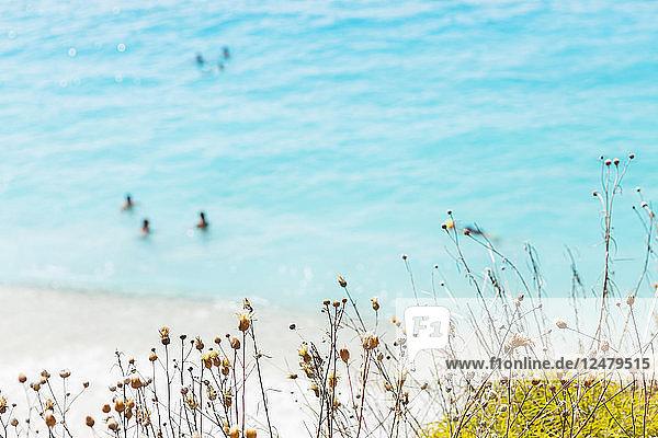 Blumenknospen am Strand