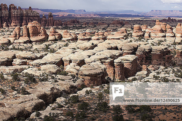 Rock formations in the Chesler Park region of Canyonlands National Park near Moab  Utah.