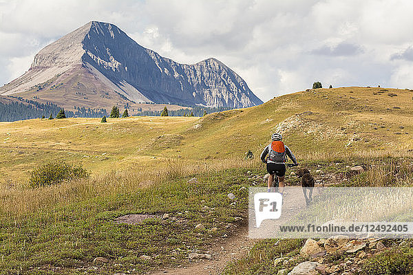 a Woman and her dog mountain biking the Molas Pass section of the Colorado Trail with Engineer Mountain in the background  San Juan National Forest  Silverton  Colorado.