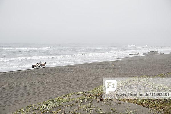 Rider and horses traverse beach  foggy day