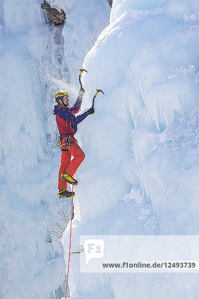 A man ice climbing a frozen waterfall in the Ouray Ice Park  Ouray  Colorado.