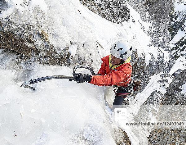 A woman ice climbing a route called Birdbrain Boulevard on the Camp Bird Road near  Ouray  Colorado.