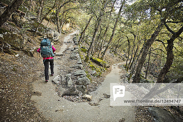 A backpacker hikes up a wooded trail in Yosemite National Park.