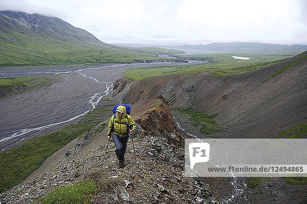 Woman backpacker hikes up Sunrise Creek in the Thorofare River valley in Denali National Park & Preserve  Alaska July 2011. Mount Eielson can be seen in the background. Much of the backpacking in the park is without trails forcing hikers to favor stream beds and river valleys.