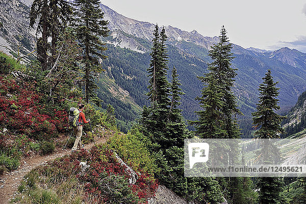 Woman hikes to the views of Glacier Peak Wilderness from Spider Gap on the Phelps Creek Trail  14.2-mile out-and-back  outside of Leavenworth  Washington September 2011. Phelps Creek leads to the base of Spider Glacier where you setup camp and hike to 7 100-foot Spider Gap. Camp has a bald eagle view of Spider Meadow below and craggy Seven Fingered Jack in the distance.