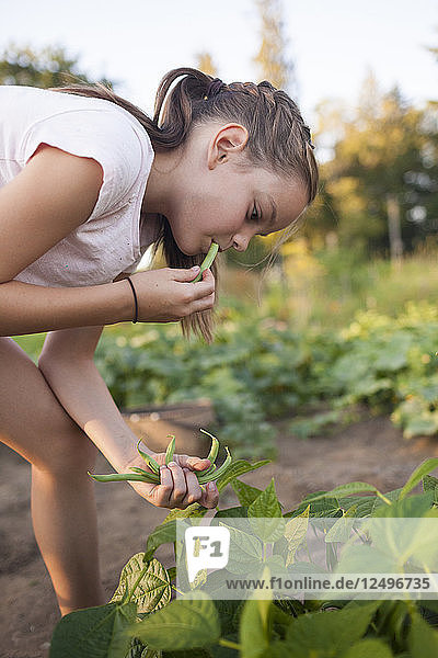 A Young Girl Eating Green Bean While Harvesting Vegetables From Her Garden In Fort Langley