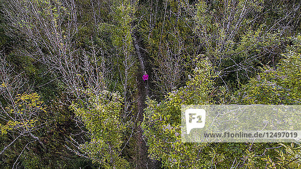 aerial view of a runner with pink top running on a trail in the forest in autumn  in Clarafond-Arcine  Rh?¥ne Alpes in France
