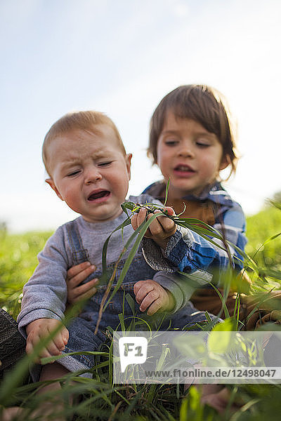 An older brother tries to feed his younger brother green grass from a farm field.
