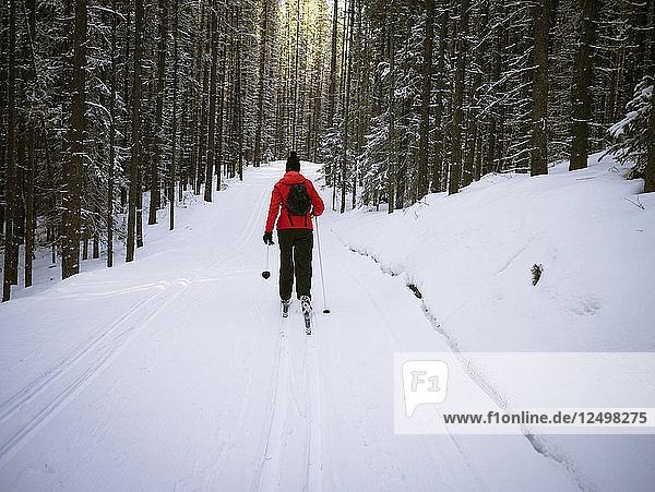 Female Skier Hiking In Snowy Region Of Kananaskis  Alberta  Canada