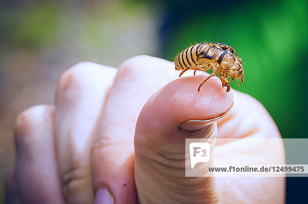 A Hollowed Out Carcass Of A Bee Sits On A Woman's Thumb