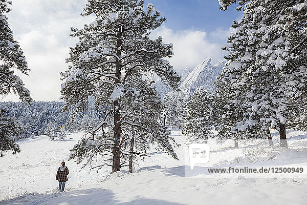 Amanda Martinez hikes through the snow towards the Flatirons in Chautauqua Park  Boulder  Colorado.