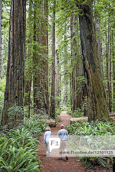 Couple Hiking Through The Towering Trees Along A Trail In Redwoods National Park