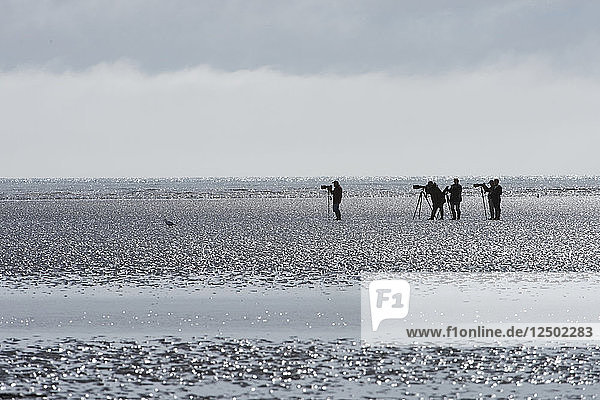 Photographers set up at low tide at Lake Clark NP to shoot cubs digging for clams