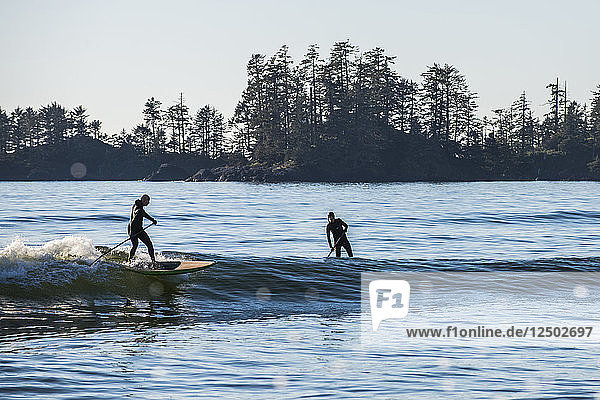 Paddle board surfing in Tofino  British Columbia.