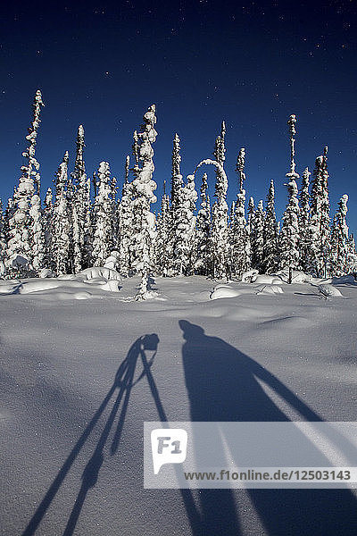 Shadow Of Photographer On Snowy Landscape With Snow Covered Trees In Background