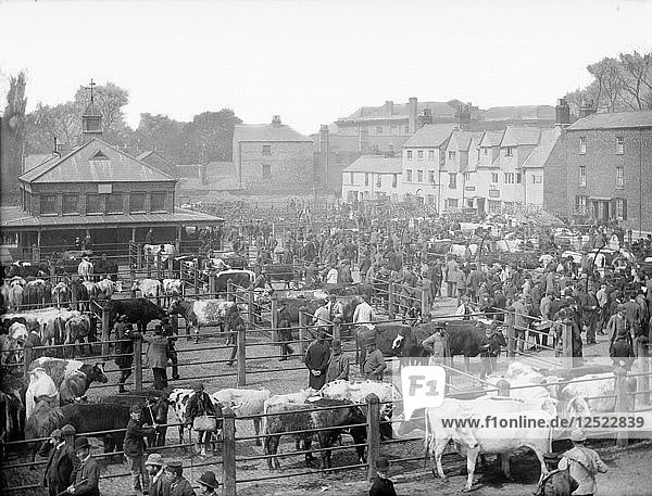 The cattle market at Gloucester Green  Oxford  Oxfordshire  c1860-c1922. Artist: Henry Taunt