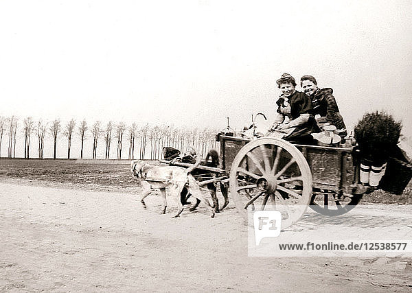 Dogs pulling women on a cart  Antwerp  1898.Artist: James Batkin