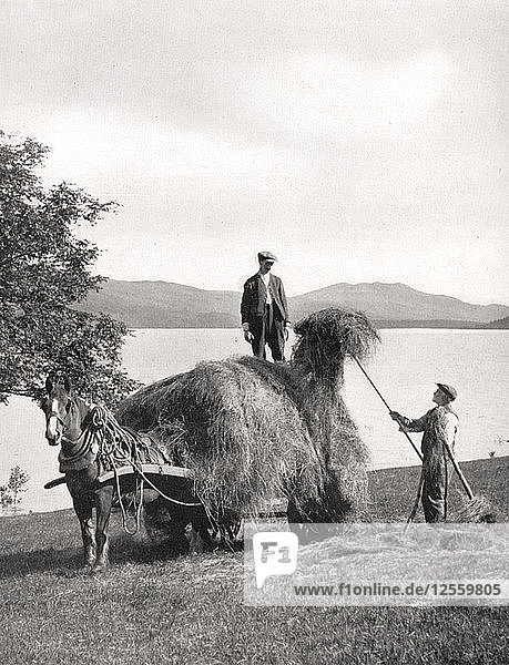 Loading hay onto a wagon on the shores of Loch Lomond  Scotland  1924-1926.Artist: Donald McLeish
